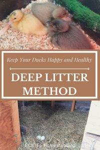 deep litter method