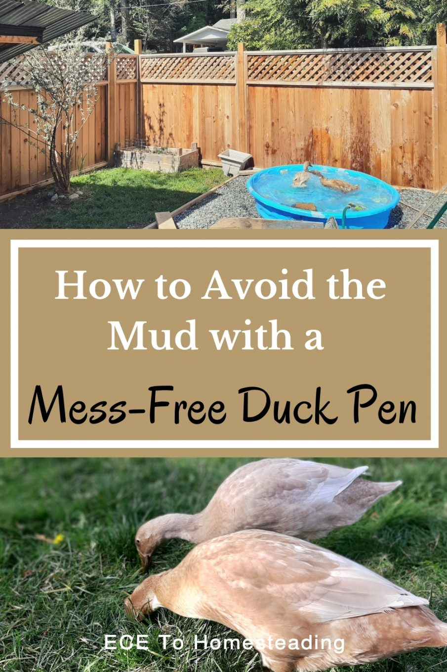 how to make a mess-free duck pen
